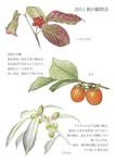 2011秋の観察会彩色.jpg
