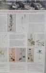 植物画の発表.jpg