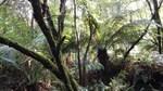 温帯雨林.jpg