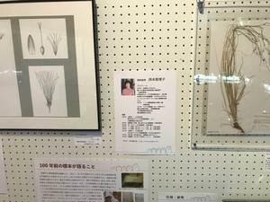釧路スゲ展1.jpg
