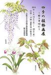 sasayuri02-thumb-170x247-776.jpg